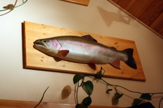 Kenai River trophy rainbow trout wood fish carving