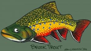 Brook Trout iPad sketch