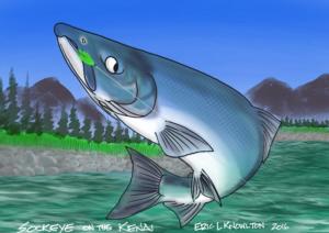 Sockeye salmon iPad sketch