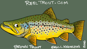 Brown Trout cartoon sketch iPadPro Reel Trout Studio Eric L Knowlton